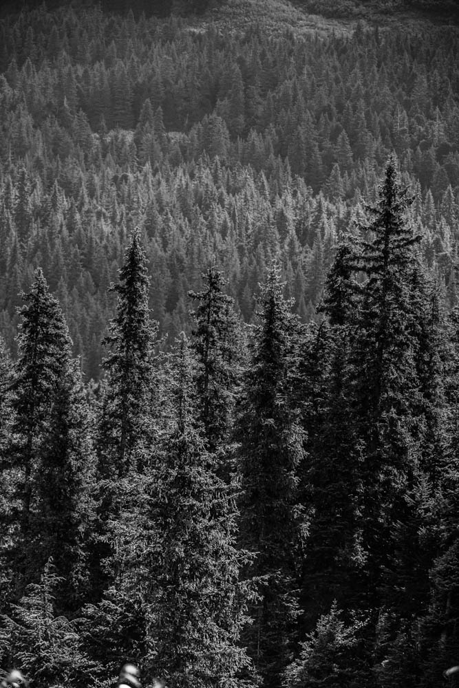 alaska-IMG_9212.jpg