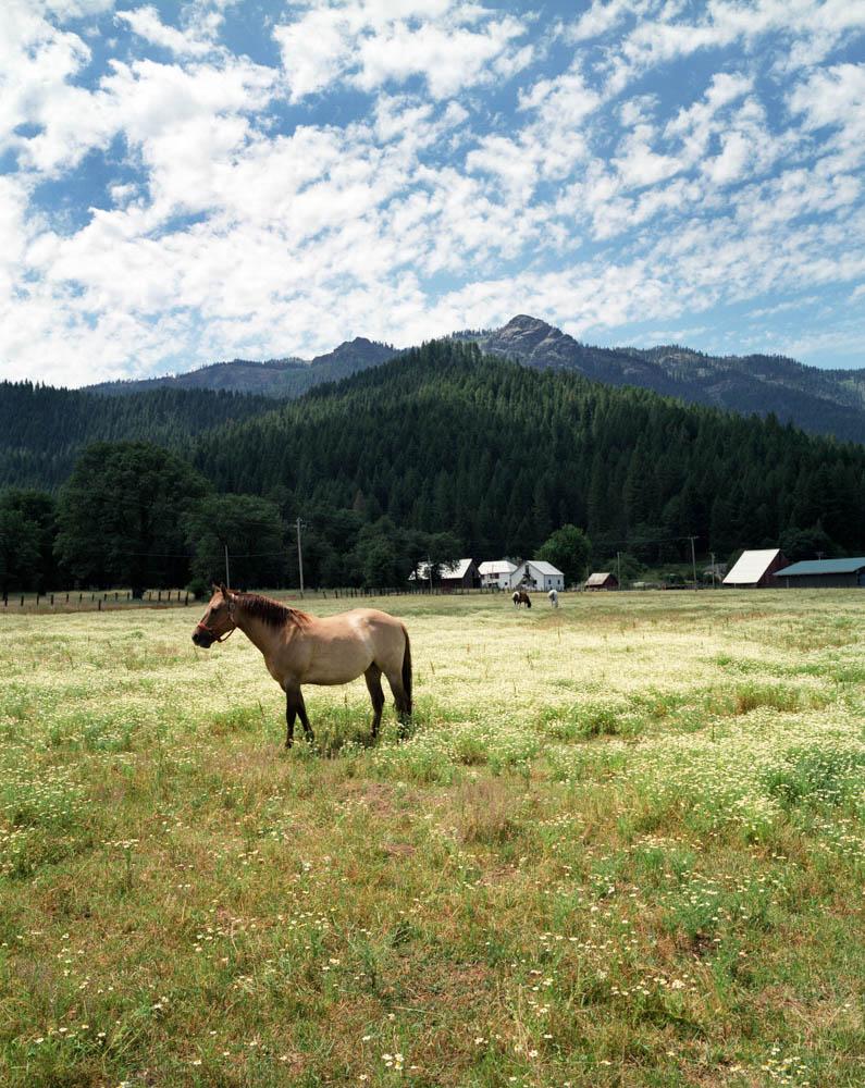 Taylorsville Rodeo V