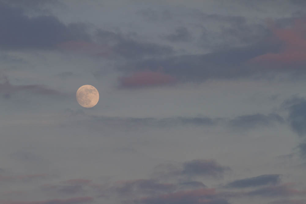 TK Moon