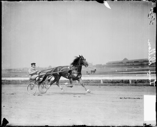 Image of Lou Dillon, a racehorse, trotting on a racetrack in Chicago, Illinois, harnessed to a carriage. An unidentified man is sitting in the carriage. Buildings are visible in the background.