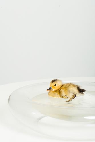 ducksXV0P8552.jpg