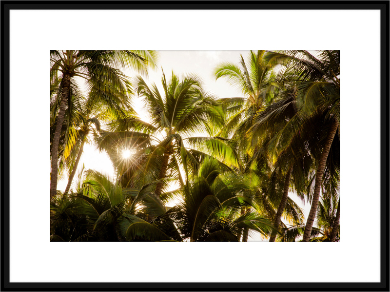 hawaii-IMG_5196-B.jpg
