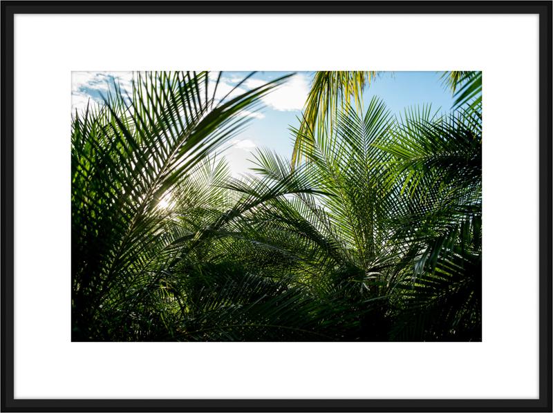 Costa-Rica-L1006564-B.jpg