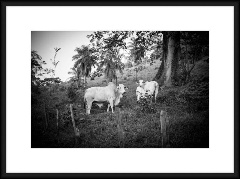 Costa-Rica-L1008239-B.jpg