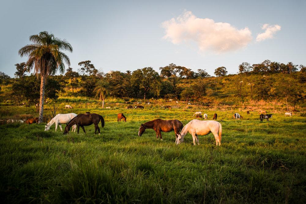 Costa-Rica-L1008188-2.jpg