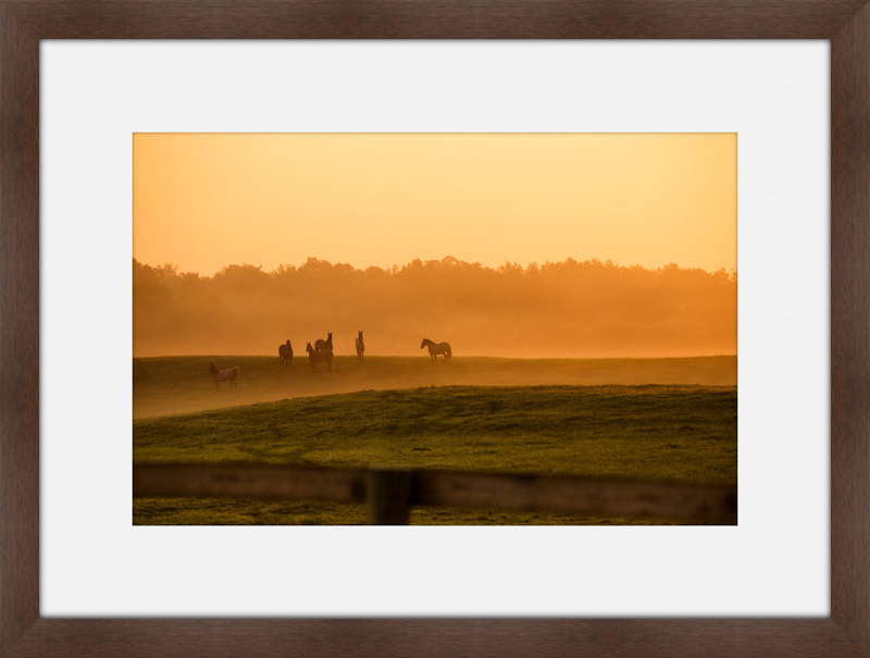 Meadow-4.jpg