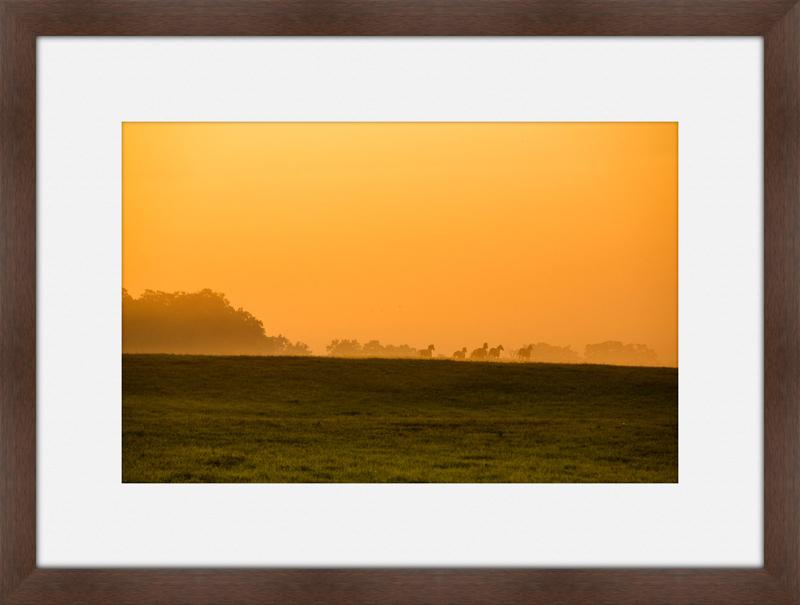 Meadow5.jpg