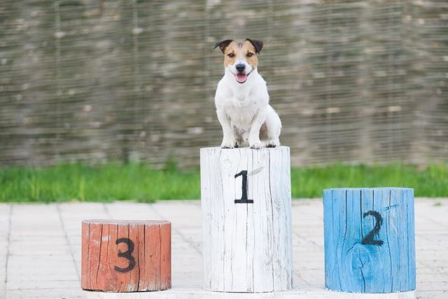Running with your pup this weekend at the #CanberraTimesFunRun? Celebrate your paw-some achievement  with a pic at the @salesforceapac Hub's Puppy Winner Podium! 🐾