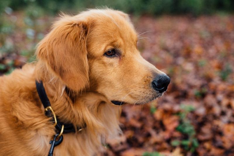 Sama-Dog-Fall-Dog