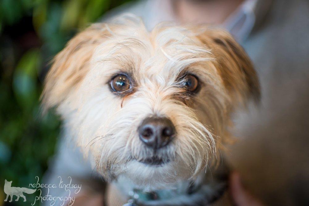 Sama-Dog-Pack-Benny