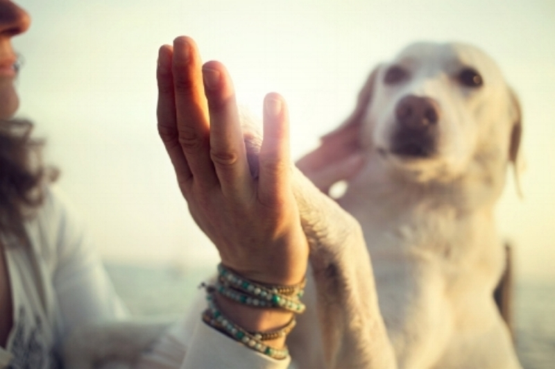 Dog Rescue White Tara.Art by Lasha Mutual