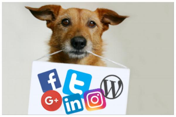 Sama_Dog_social_media_coordinator