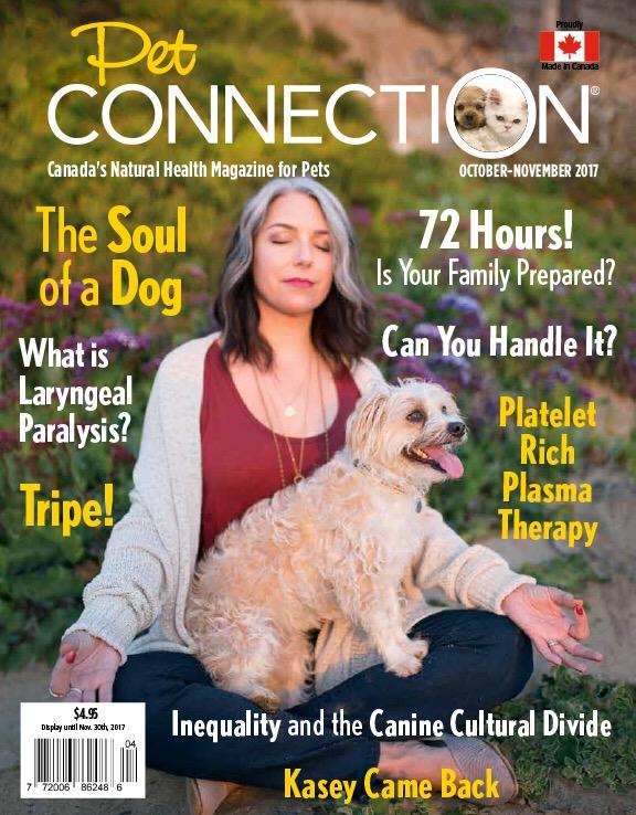 Sama_Dog_Pet_Connection