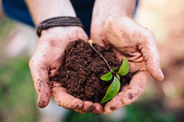 To have lovely healthy plants, you need healthy soil...and to have healthy soil you need the following ingredients: -compost -moisture -good drainage -mulch
