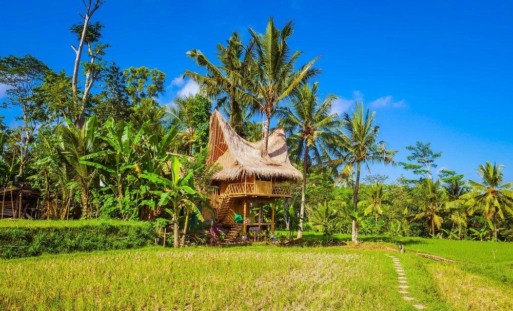 Airbnb Bali Treehouse Rental