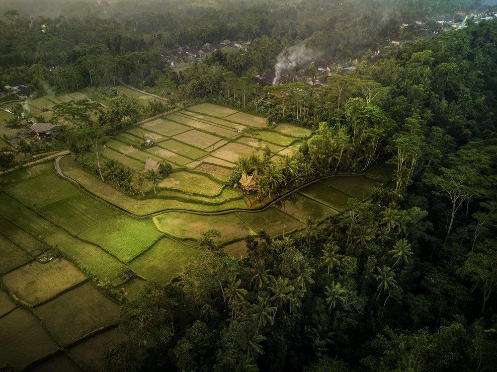 Airbnb Bali Ubud Treehouse