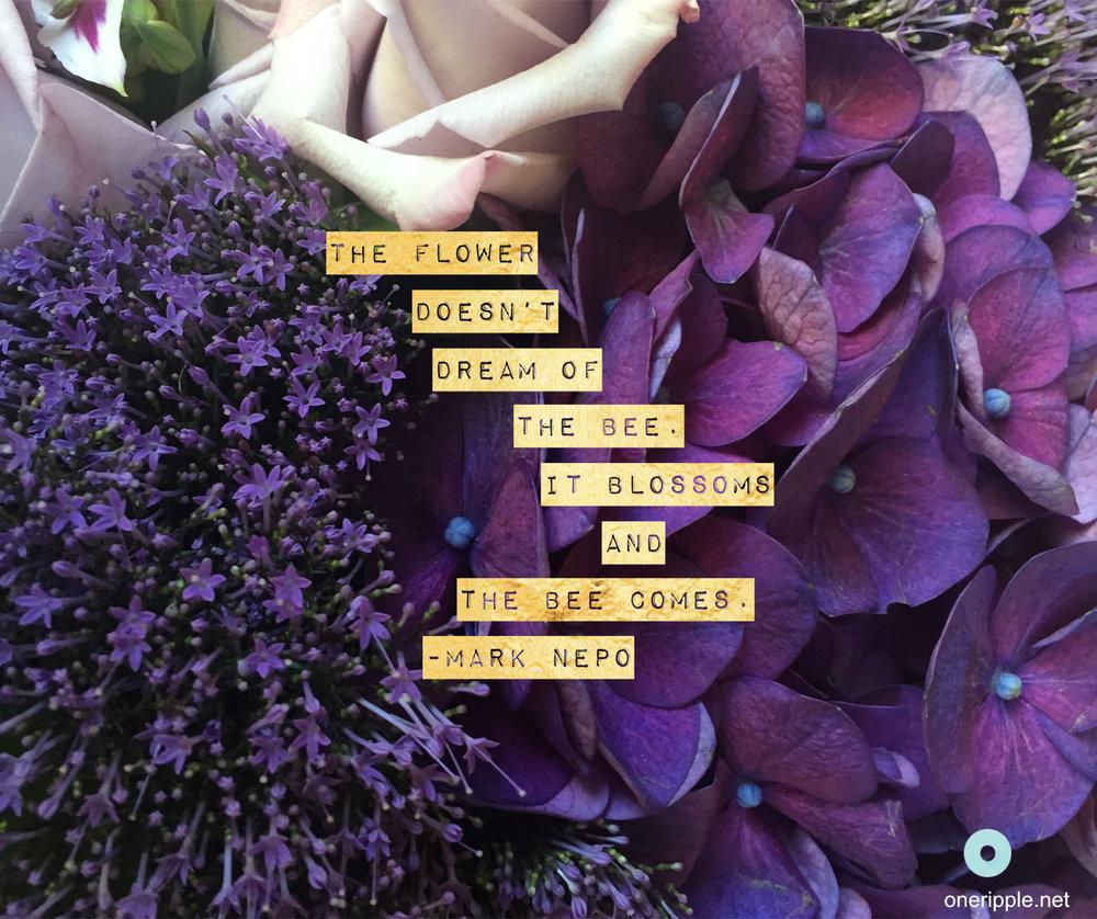 BeeBlossom.jpg
