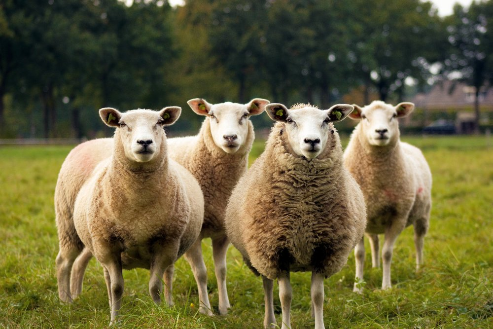 """You were not born to be a """"sheeple."""""""