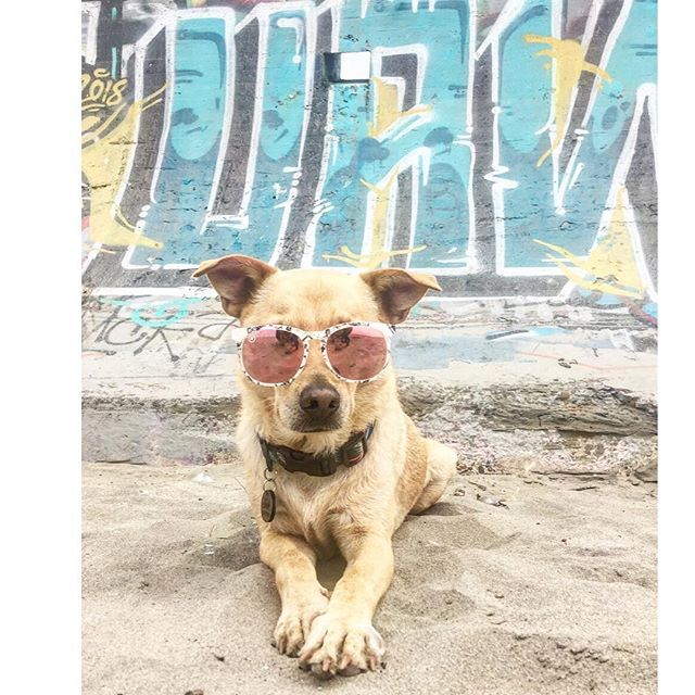 What's SUP San Fran ✨ I digged your cool vibes and sooooo many dog friendly waters // check it out on @sup_pup_tails