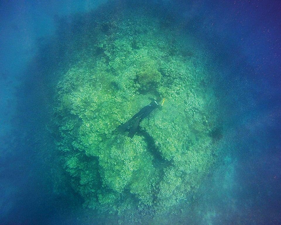 Freedive Blue Marine_Student_Hans Reef