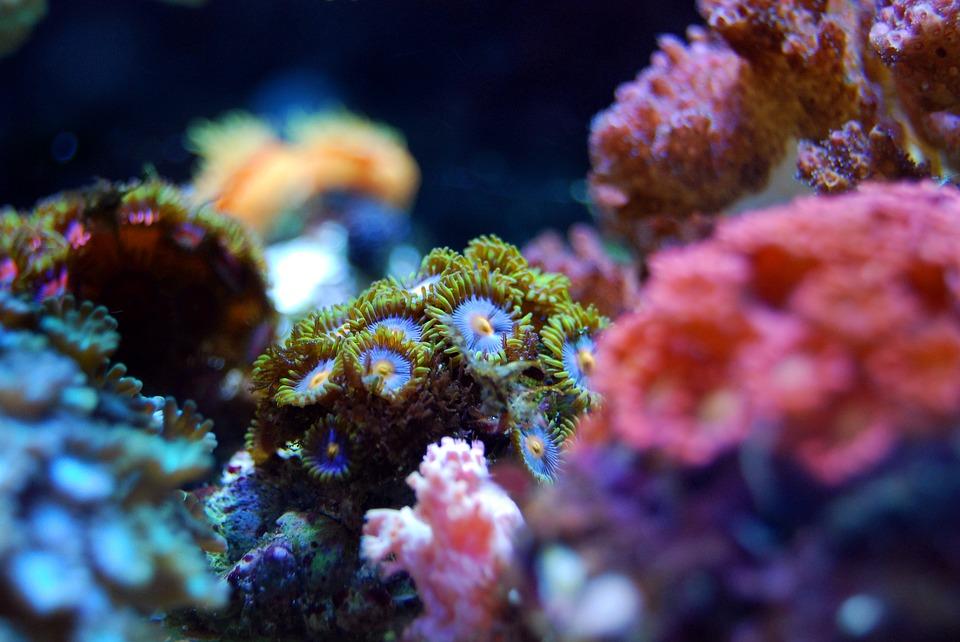 coral-2745956_960_720-1.jpg