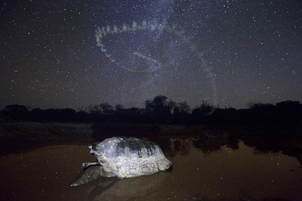 tortoise_stars2.jpg