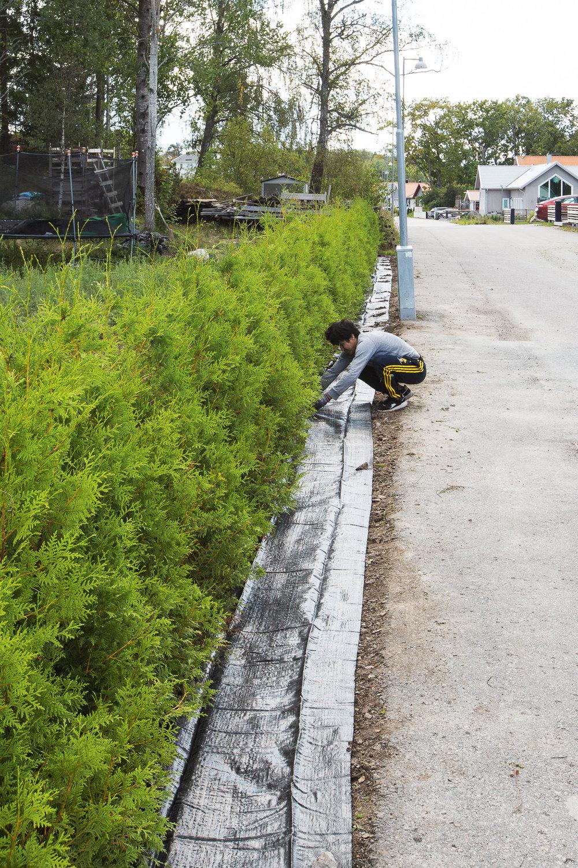 Gholam lägger markduk så vi ska slippa ogräset. Stort tack för hjälpen!