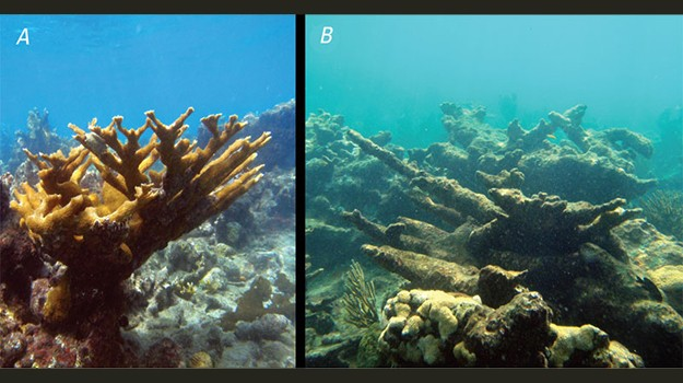 Decline in pH has consequences on organisms that rely on calcium carbonate for shells and skeletons