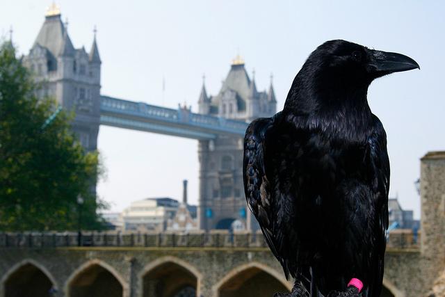 Ravens London.jpg