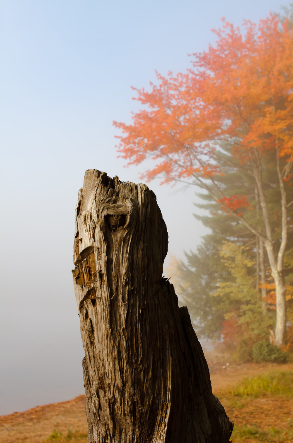 Foggy Stump.jpg