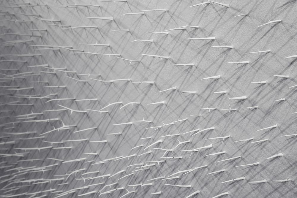 Murmuration I (Detail 1)   Site Specific Installation at Indy Arts Council 924 Gallery   Honey Locust Thorns, T-Pins, White Paint   28' x 10' 2014