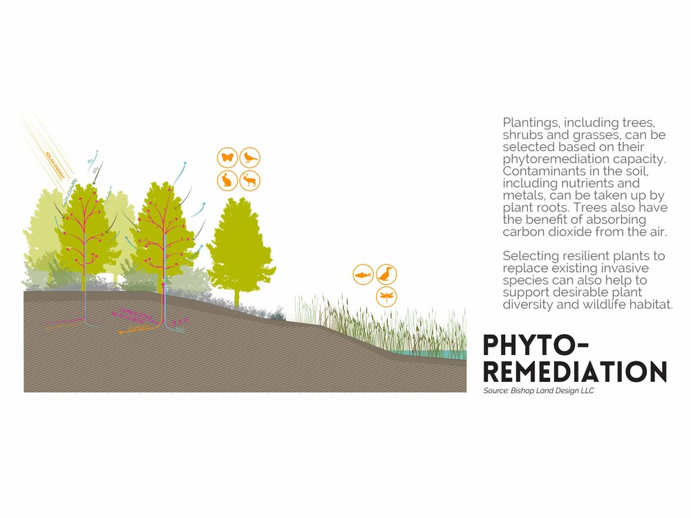 BLD_Eastwick_Section_Phytoremediation-02.jpg