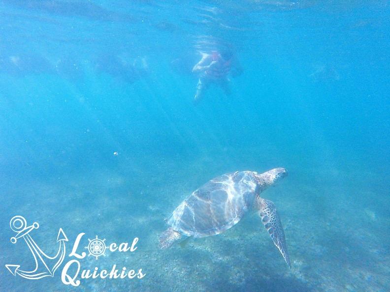 turtlesnorkel.jpg