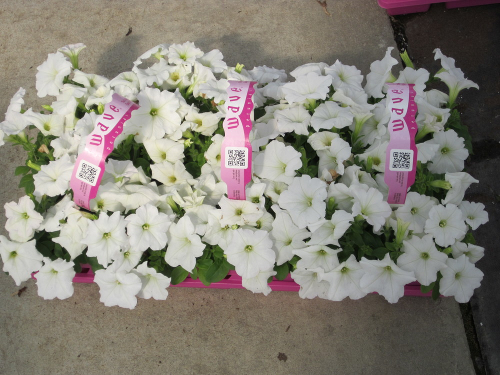 5-9-11 Flowertime #5.JPG
