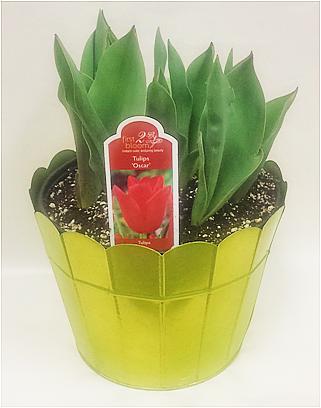 D8 Rd Spring Bulb 52860 (1).png