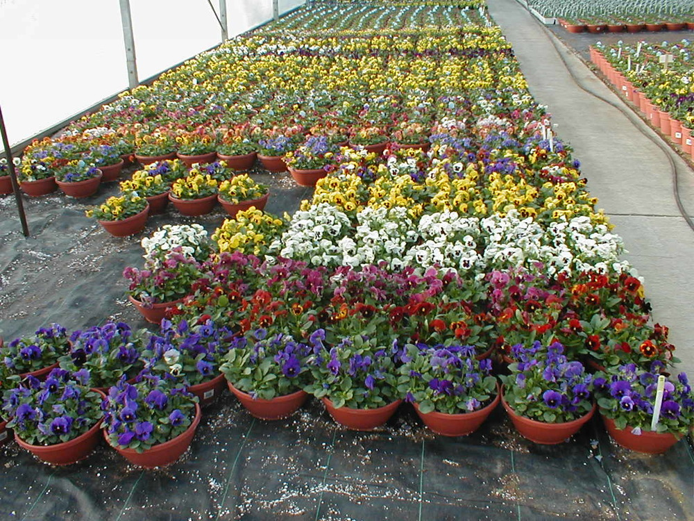 COLOR BOWL GREENHOUSE.jpg
