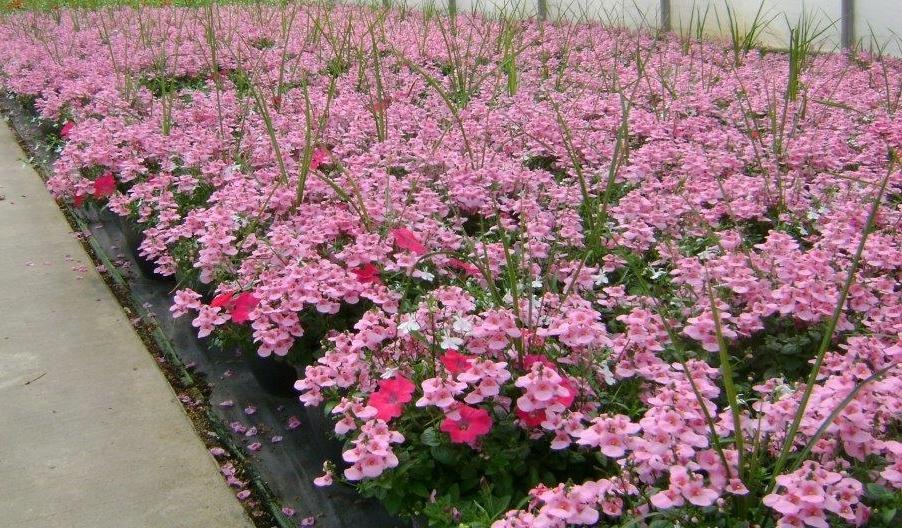 Plants Unlimited Meijer D11 Patio Pots4 041015.jpg