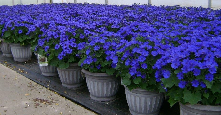Plants Unlimited Meijer D11 Patio Pots8 041015.jpg