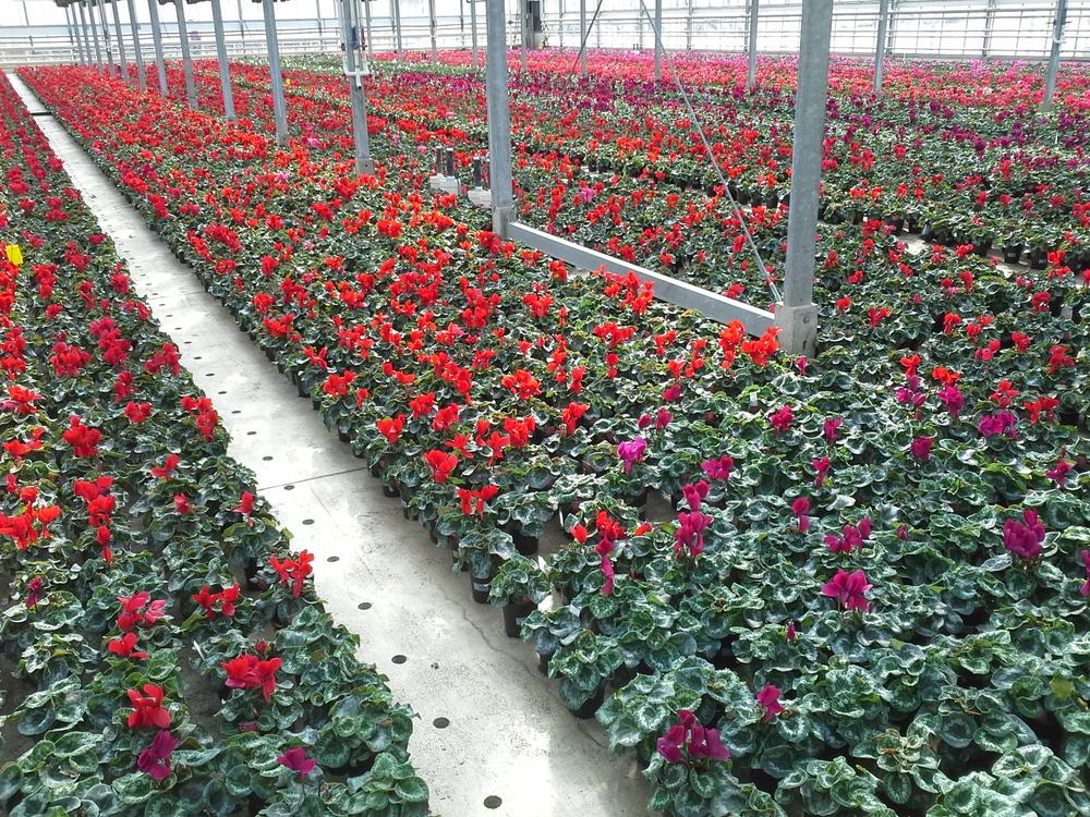 Plants Unlimited wk14 (12).jpg
