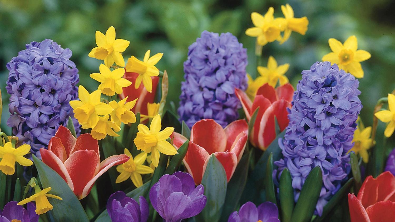 bulbs lilies kalamazoo flower group