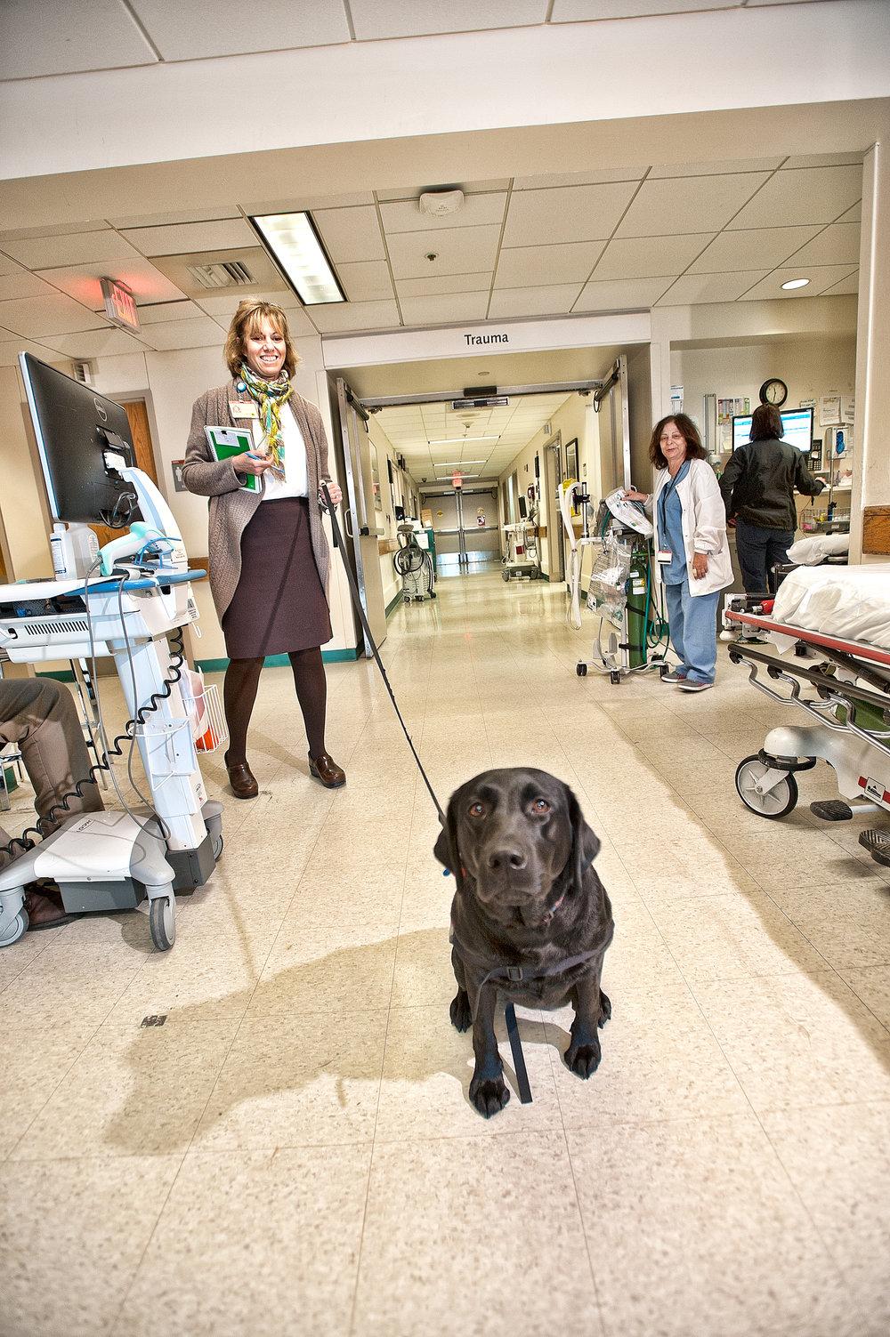 Hosptal care doggie
