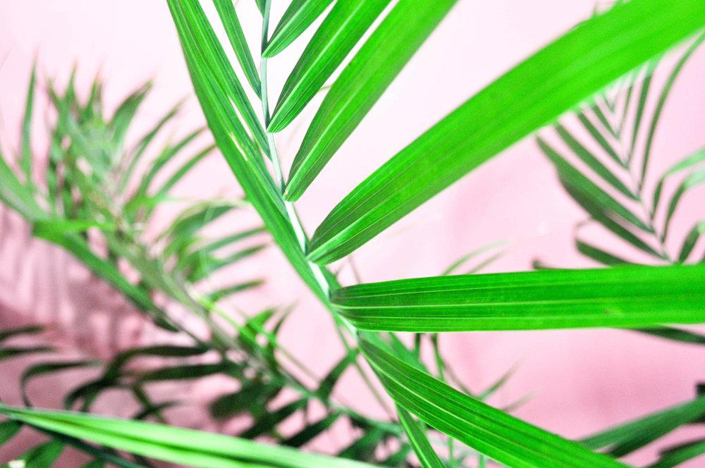 Pink photos  (7 of 8).jpg