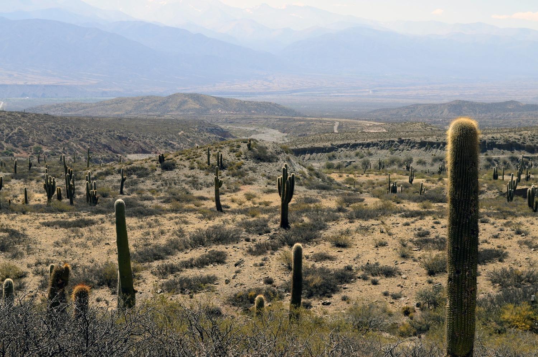 perfect desert backyard u2014 presidential pools spas u0026 patio of arizona