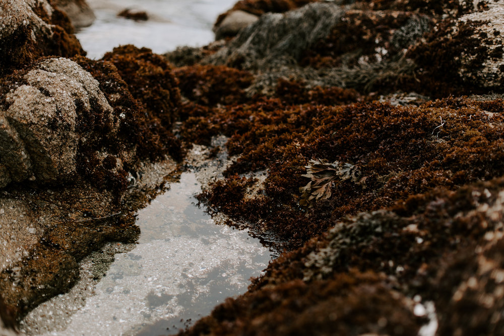Al + Toni Asilomar Beach Elopement