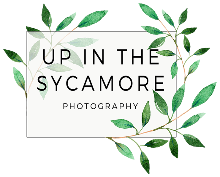 Up in the Sycamore Photography