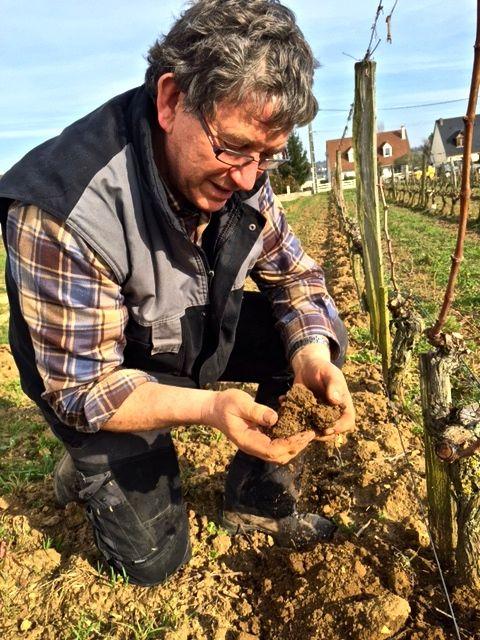 Lambert lively soils.jpg