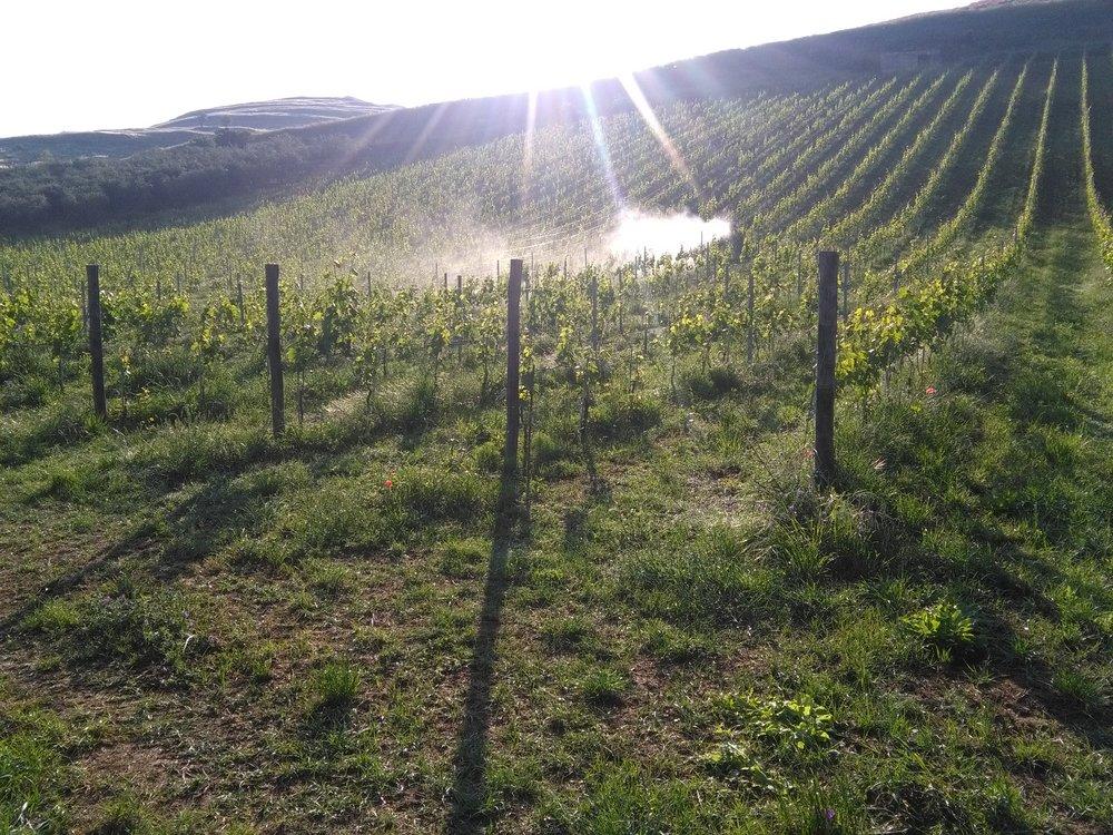 Camerlengo Vineyard Accamilla - Toppo d'Avuzzo.jpg