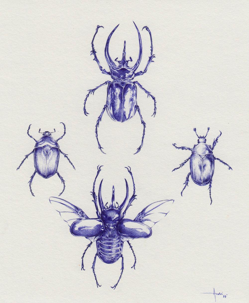 Estudio de Escarabajos