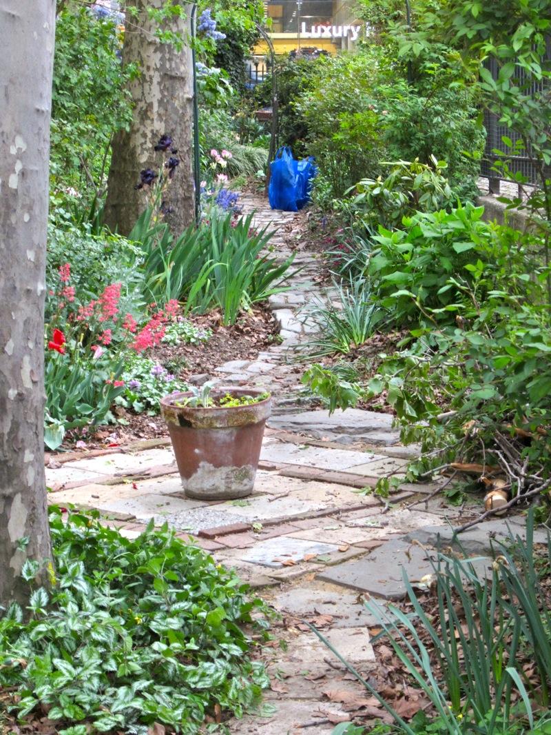 the dewitt clinton rose garden —