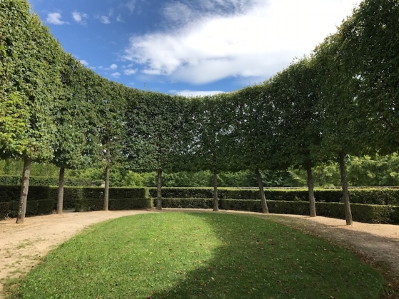 trimmed trees trianon.jpg